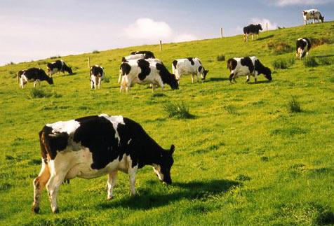 5 lợi ích tuyệt vời từ sữa bò non bạn cần phải biết