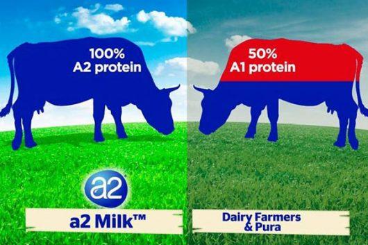 Sữa tươi dạng bột A2 và hàm lượng dinh dưỡng có trong sữa