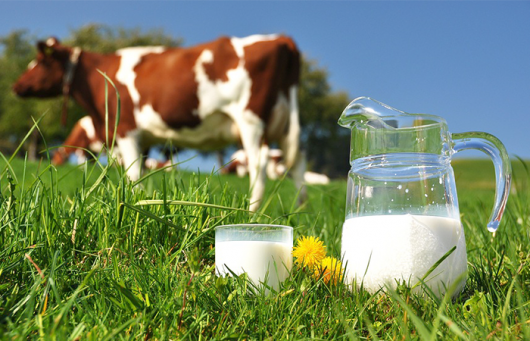 Phần lớn các sản phẩm sữa hiện nay đều chứa Protein A1 gây nên hiện tượng dị ứng sữa bò ở trẻ