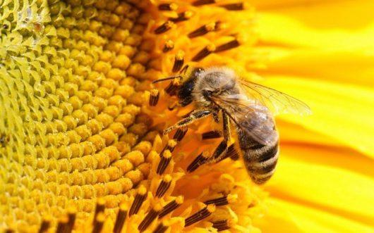 Những công dụng kì diệu từ keo ong