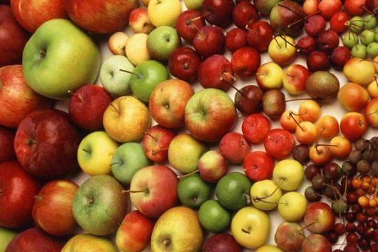 10 chất dinh dưỡng không có trong thịt