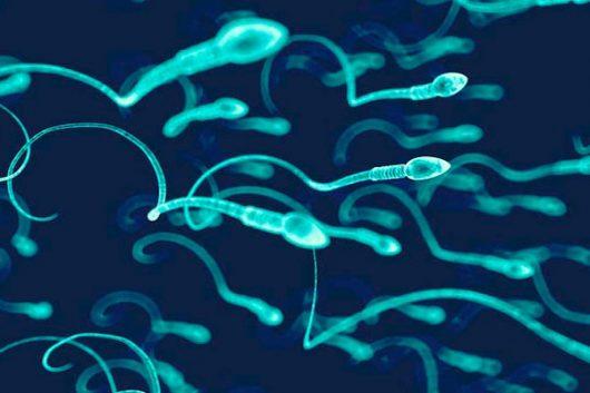 Khả năng di động của tinh trùng